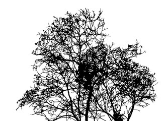 Silhouette of tree without leaves isolated on white background vector