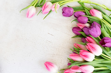 Pink and violet tulip flowers on gray background with copy space