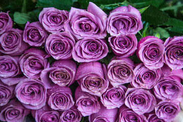 Fresh lilac roses in a bouquet with water drops.