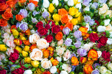 Fresh multicolored roses in a bouquet with water drops.