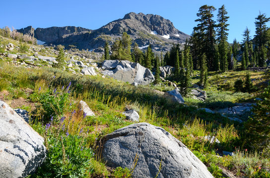 Alpine meadow with wildflowers and granite boulders under a high mountain peak in California's Sierra Nevada mountains