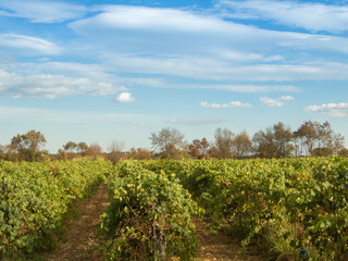 Vineyard landscape with a cloudy sky
