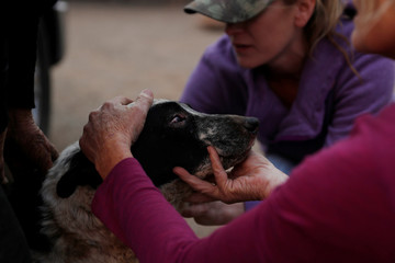 Veterinarian Dawn Alves tends to a dog named Fatty who received burns on its eyes and chin during the Camp Fire in Paradise