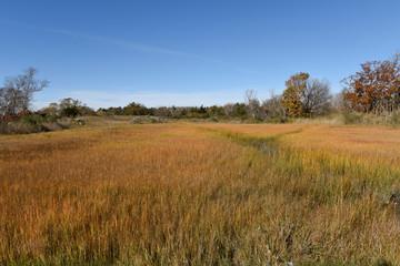 Orient. Long Island meadow