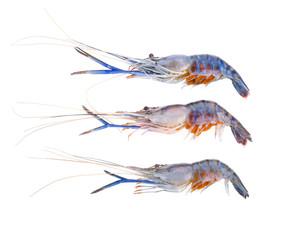 Giant freshwater prawn isolated on white background