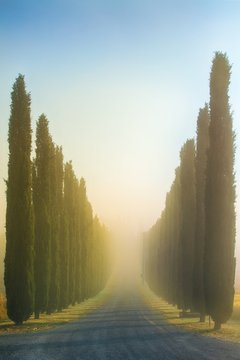 Tuscan landscape early morning
