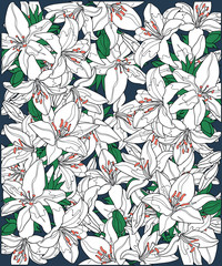 background of white blooming lilies