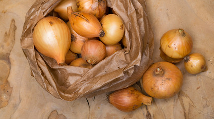 Harvest organic onion. Agriculture and horticulture.