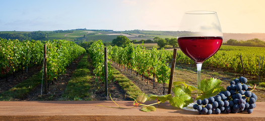Photo sur Plexiglas Saumon Vin rouge et raisin devant un vignoble en Anjou