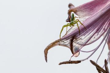 地球外生命体を思わせる蜘蛛と花。