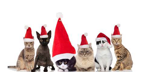 adorable group of six santa cats sitting and standing
