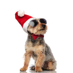 cool santa yorkshire terrier with bowtie looks up to side