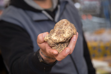 truffle tuber sought