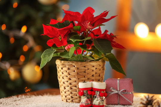 Christmas flower poinsettia with gift box and baby boots on table