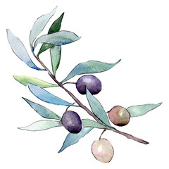 Olives. Green leaf. Leaf plant botanical garden floral foliage. Watercolor background illustration set.