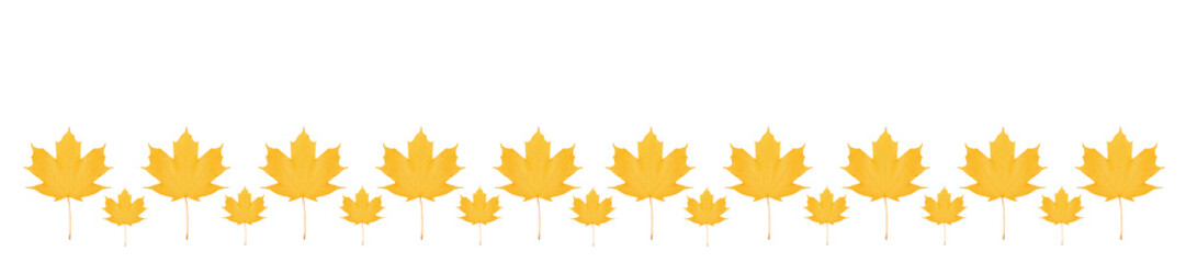 Wall Mural - panorama pattern yellow maple leaf bright