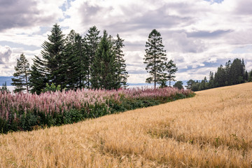 Wheat field with flowers and trees