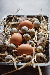 Raw quail, chicken eggs on black plate, easter concept, dark concrete background, top view,