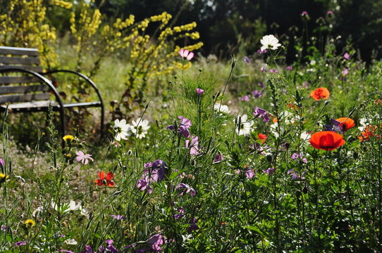 bench by wildflower meadow in garden