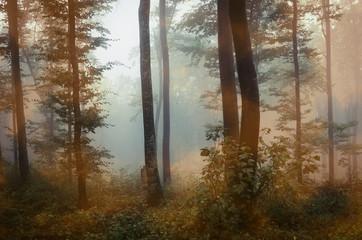 magical woods landscape