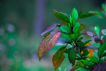 Natural leaves seen during the day in a soft background
