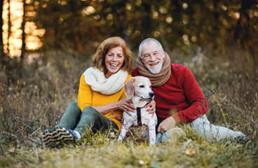 A senior couple sitting on a grass with a dog in an autumn nature at sunset.