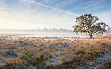 oak tree by lake on misty frosty morning