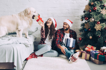 laughing girl in santa hat putting present box in mouth of golden retriever while her boyfriend sitting near at home