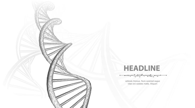DNA. Abstract 3d polygonal wireframe dna molecule helix spiral on white background.