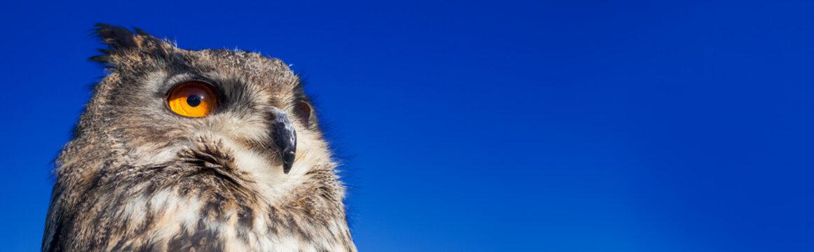 European Eagle Owl Panoramic Web Banner