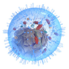 3d rendered medically accurate illustration of a human cell