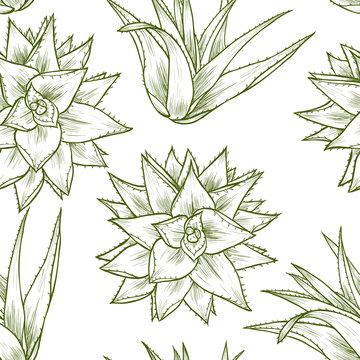 Aloe vera. Vector seamless pattern. Vintage style