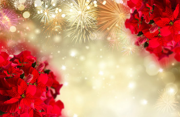 scarlet poinsettia flower or christmas star on festive golden background with fireworks
