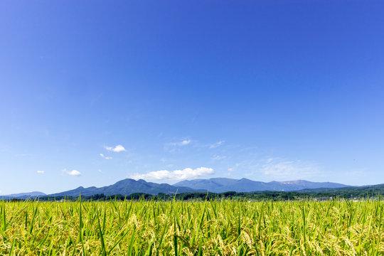 稲作と蔵王 宮城