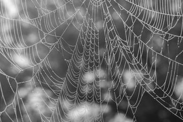 Spinder Web after morning fog