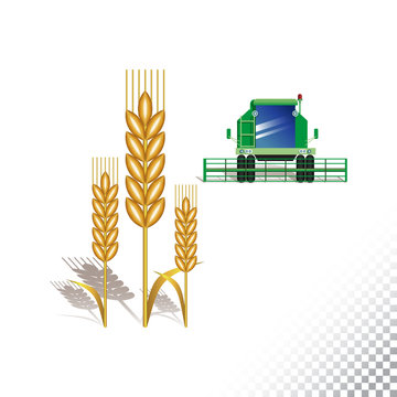 Vector flat icon illustration of wheat spikelet and harvester. Colorful objects on a transparent background.