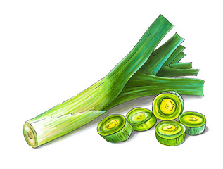 Colorful and juicy illustration of green onion leek. Drawing alcohol markers useful vegetable. Veggie food.