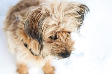 Furry dog having fun in snow