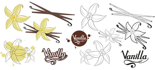 hand drawn vanilla beans, spicy ingredient, vanilla flower logo, healthy organic food, spice vanilla on white background, culinary herbs, label, food, natural healthy food, vector graphic to design