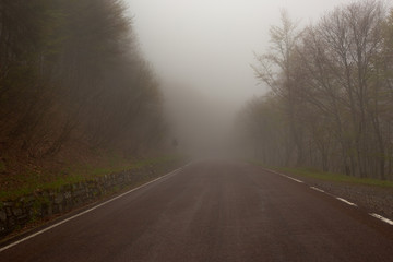 Wall Mural - fog road in forest at morning