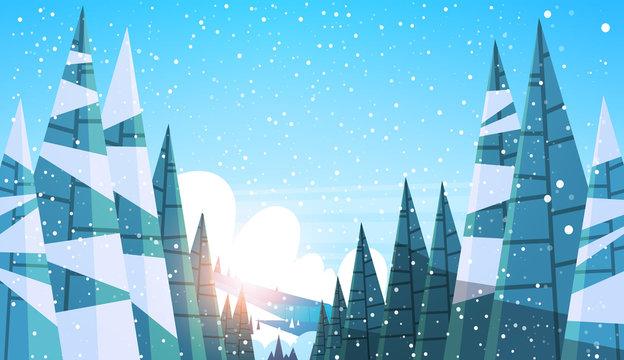 Winter snowy forest pine fir tree woods