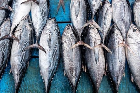 fresh tuna in the market