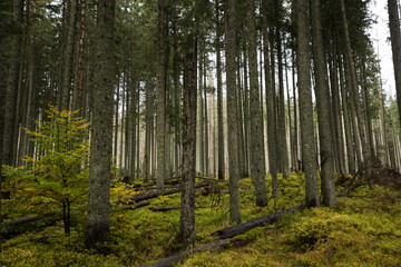 Poland Forests