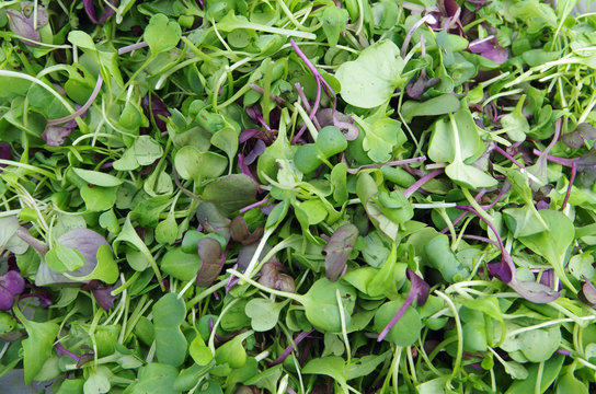 Fresh mix microgreens salad view from above