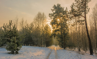 Walk in the winter forest. Morning. Landscape. Nature. Winter. Snow.