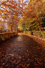 Trees in a park on a pathway in Autumn