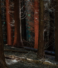Naked trees in forest