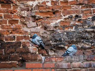 background of old brown clay brick wall