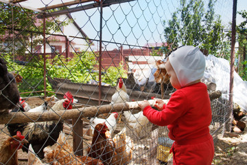 a small child in a red suit and white hat is looking at chickens and a rooster in a chicken coop on a farm