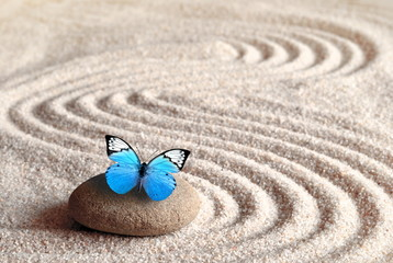 A blue vivid butterfly on a zen stone with circle patterns in the grain sand.